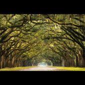 Glasbild DiBond Road 80*120 cm